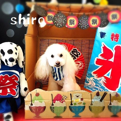 shiro 笠