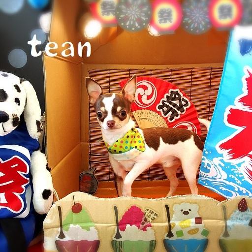 tean 藤井