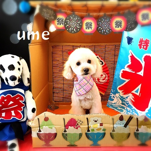 ume 津村