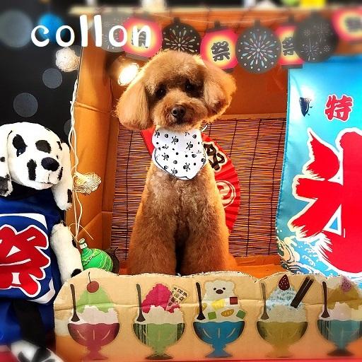colon 藤原