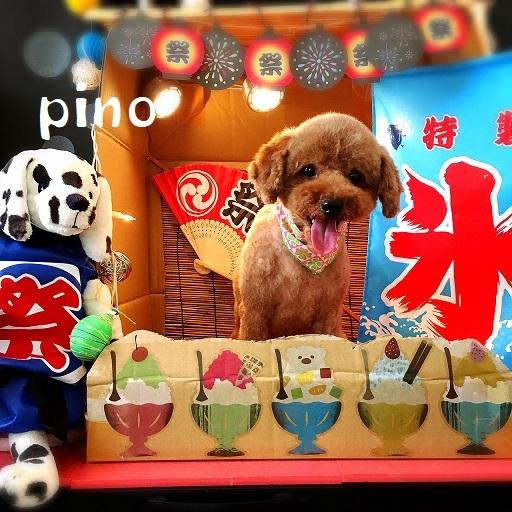pino 小野