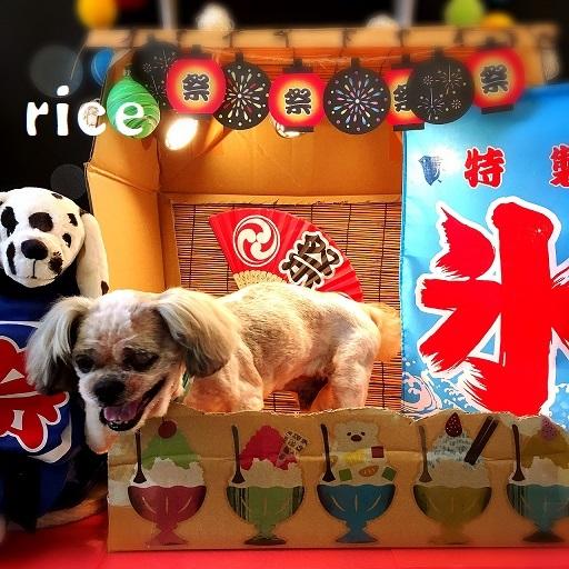 rice 松本