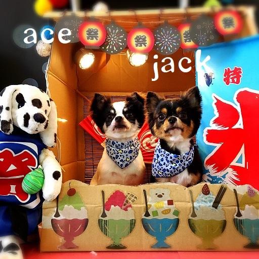 jackace 橋本