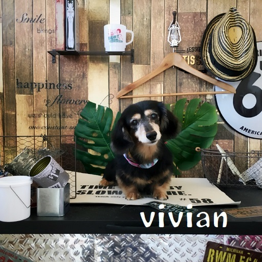 vivian 佐々木