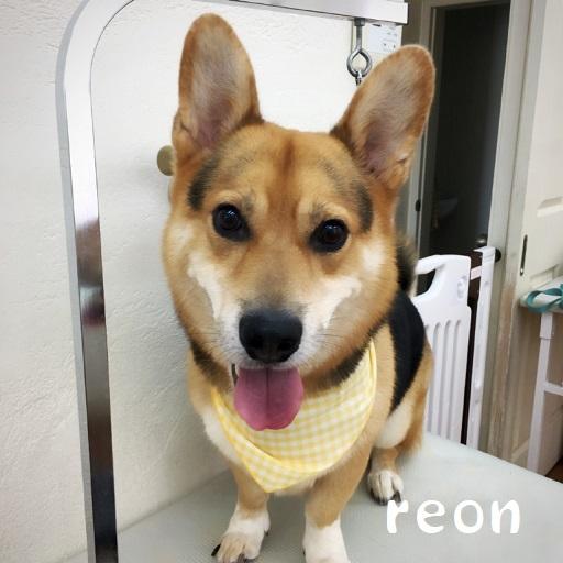 reon 鶴田