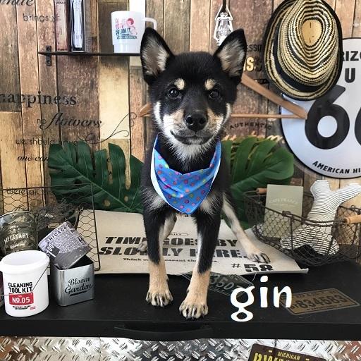 gin 高橋