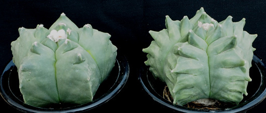 亀甲ヘキf1−2