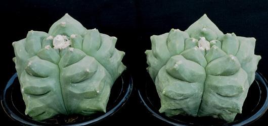 亀甲ヘキf1−1
