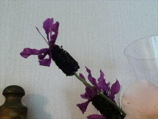 lavendar_lococo (1)