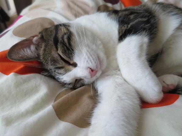 AAA MAYA SLEEP