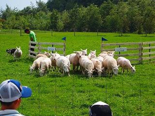エコりん村の羊