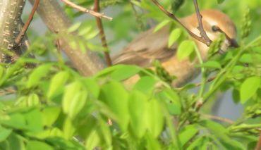 IMG_8845野鳥