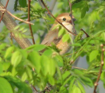 IMG_8846野鳥