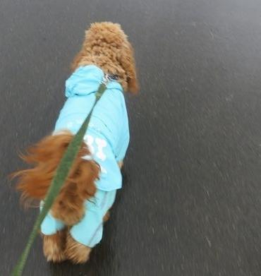 IMG_8848雨散歩