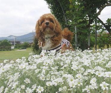IMG_8876白い花