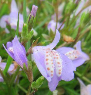 IMG_8883紫花