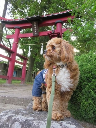 IMG_9135神社