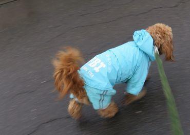IMG_9177雨散歩
