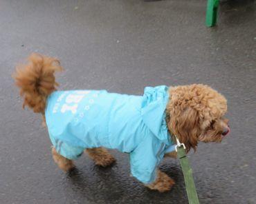 IMG_9179雨散歩