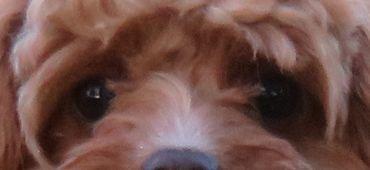 IMG_9252眉毛のような