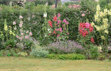 IMG_0117バラ公園花壇