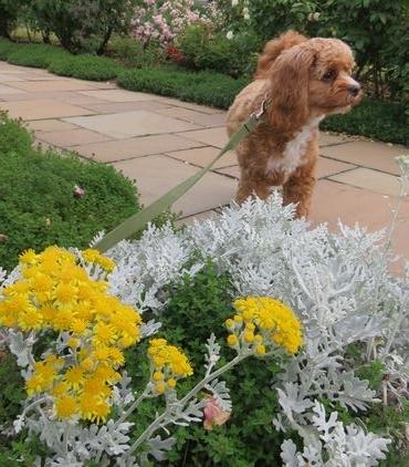 IMG_0106バラ公園花壇
