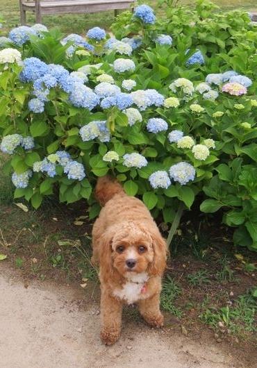 IMG_0108バラ公園花壇