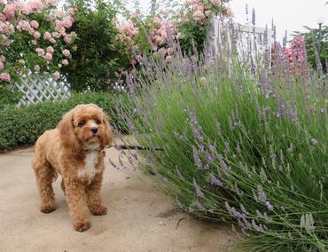 IMG_0115バラ公園花壇