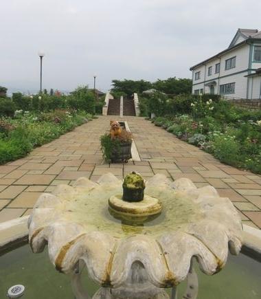 IMG_0547バラ公園