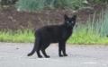 IMG_0631黒猫