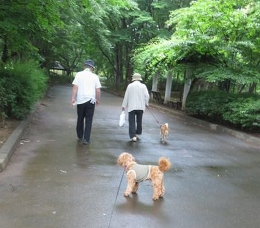 IMG_0696柴犬