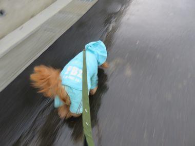IMG_1741雨散歩