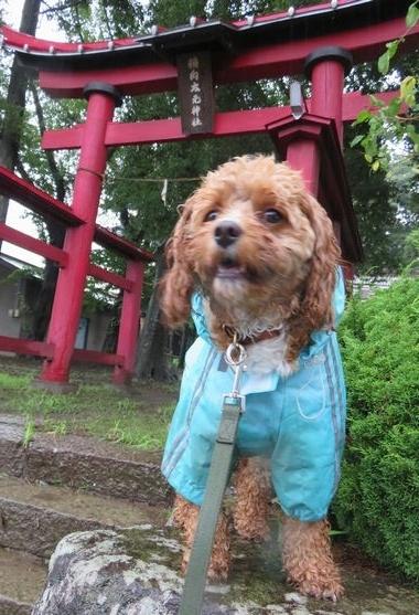 IMG_1750雨散歩