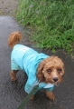 IMG_1767雨散歩