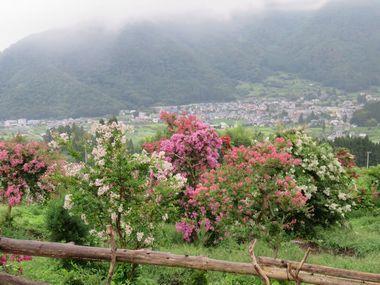 IMG_1805サルスベリの丘
