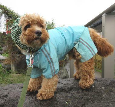 IMG_2332雨散歩