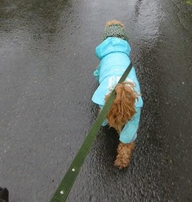 IMG_2342雨散歩