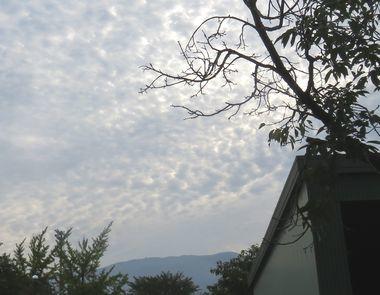 IMG_2894うろこ雲
