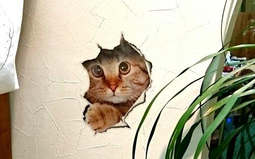 壁破り猫ステッカー