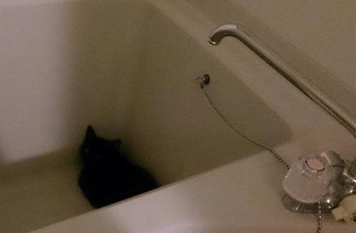お風呂に隠れる