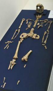 337abf4a58100a国内初の旧石器墓地