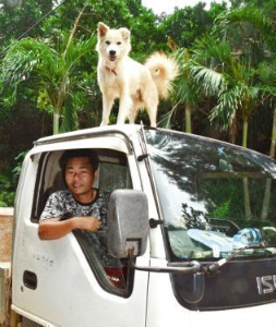 b905623e54e196車上の犬