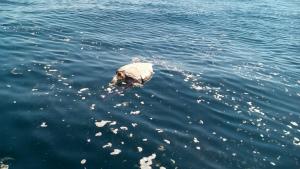 dead-sea-turtles-el-約400頭の死んだウミガメ