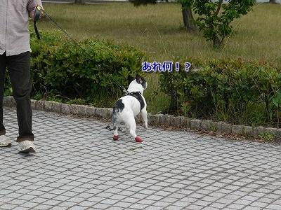 なぎさ公園 (1)