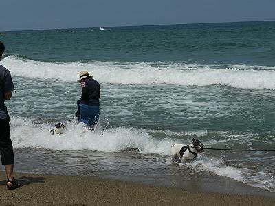 白兎海岸 (4)
