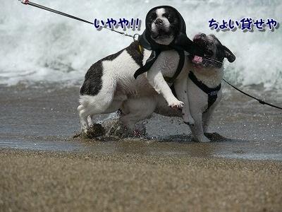 白兎海岸2 (4)