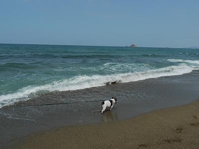 白兎海岸4 (3)