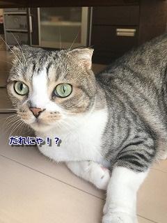 にゃんこ (2)