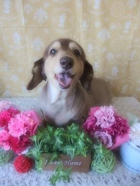 5-19桜ちゃん
