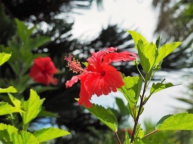 沖縄16g